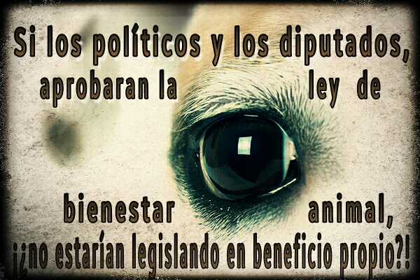 dogs-eye_20160505111617699